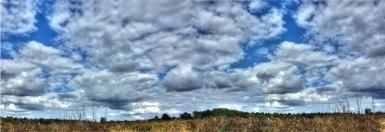 wetland-pano