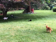 Three cats in the yard...