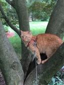 Carmella up the tree