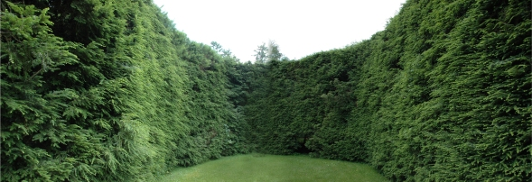 hedge-pano-1
